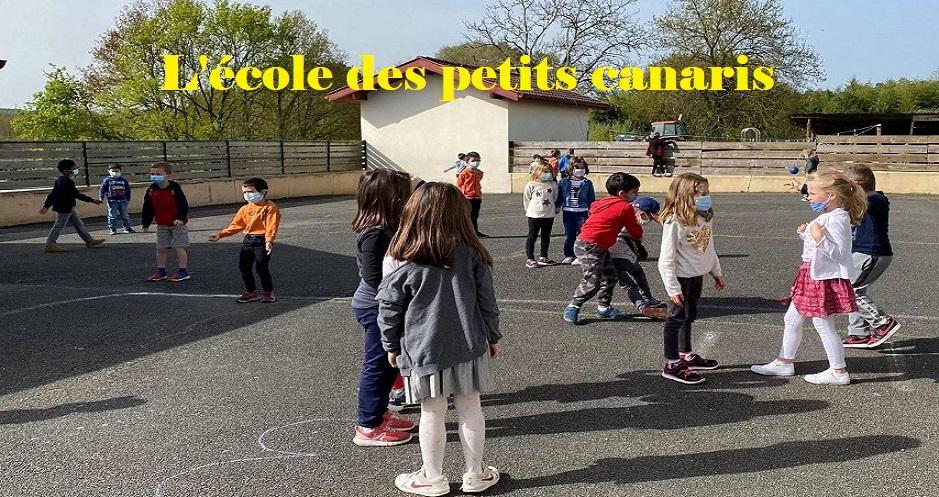 L'école des petits canaris